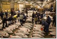 Mercato del Pesce di Tsukiji a Tokio