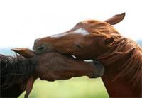 Riccione: a cavallo nella Perla Verde