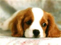 Riccione sta preparando una pensione per cani