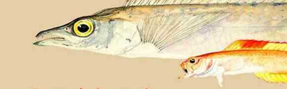 Cesenatico: una mostra dedicata ai pesci e al mare